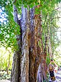 Butchart Gardens - Victoria, British Columbia, Canada (29049624641).jpg