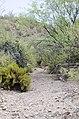 Butcher Jones Trail to Pinter's Point Loop, Tonto National Park, Saguaro Lake, Ft. McDowell, AZ - panoramio (174).jpg
