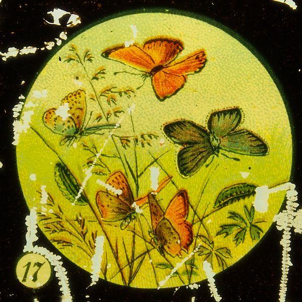 File:Butterflies Tafel V picture 17.JPG