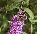 Butterfly-DSC 0106.jpg