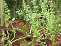Butterfly zone.jpg