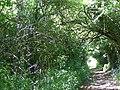 Byway, North Hill Farm - geograph.org.uk - 1334193.jpg