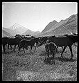 CH-NB - Persien, Elburs-Gebirge (Elburz)- Pferde - Annemarie Schwarzenbach - SLA-Schwarzenbach-A-5-06-210.jpg