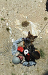Canine-Hoist Training DVIDS56874.jpg