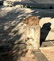 Capernaum cat (501593880).jpg
