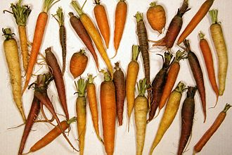 Carotene - Carotene is responsible for the orange colour of carrots and the colours of many other fruits and vegetables and even some animals.