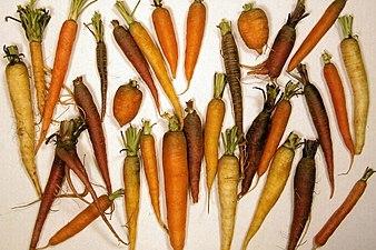 338px Carrotdiversitylg Jpg