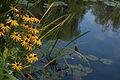 Casa Claude Monet 7582 resize.jpg