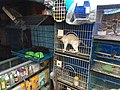 Cats and birds in Jatinegara Market.jpg