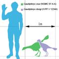 Caudipteryx-scale.png