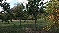 Celler Waldfriedhof Ribbeck's Garten 8679.jpg