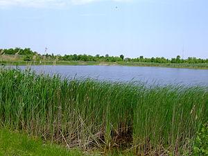 Chadwick Arboretum - Chadwick Lake