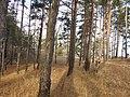 Cherkas'kyi district, Cherkas'ka oblast, Ukraine - panoramio (1190).jpg