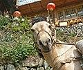 China tour long sheng small horse looking at me.jpg