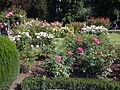Christchurch Botanic Gardens 05.JPG