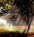 """Cincinnati - Spring Grove Cemetery & Arboretum """"Water Sprinkler - Mist & Droplits"""" (5037892610).jpg"""