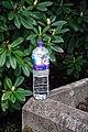 City of London Cemetery discarded water drinks bottle 1.jpg
