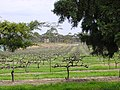 Clare Valley, Sevenhill Cellars - panoramio.jpg