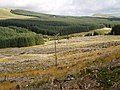 Clear fell near Drumjohn, Carsphairn - geograph.org.uk - 541551.jpg