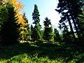 Clearing In Autumn - panoramio.jpg