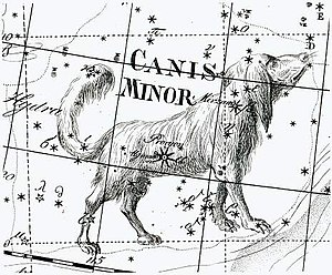 Canis Minor - Canis Minor, as depicted by Johann Bode in his 1801 work Uranographia
