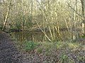 Colgate, woodland pond - geograph.org.uk - 646867.jpg