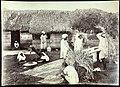 Collectie Nationaal Museum van Wereldculturen TM-60062282 Contractarbeiders dorsen en zeven rijst Jamaica J. Valentine & Sons (Fotostudio).jpg