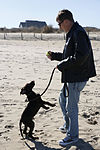 Commentary, My crash course in puppy parenting 150129-A-HL390-001.jpg