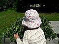 Community strawberries (5924469466).jpg