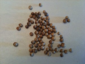 Pickling - Coriander seeds are one of the spices popularly added to pickled vegetables in Europe.