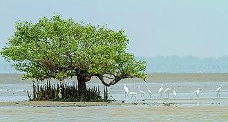 Coringa Wildlife Sanctuary - Image: Coringa Wildlife Sanctuary 1