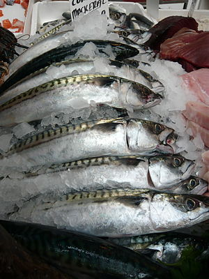 Cornish mackerel on sale at Borough Market, Lo...