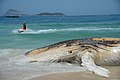 Corpo de baleia encalhada na Praia do Arpoador, no Rio (24568321048).jpg