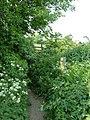 Countryside Footpath - geograph.org.uk - 812739.jpg