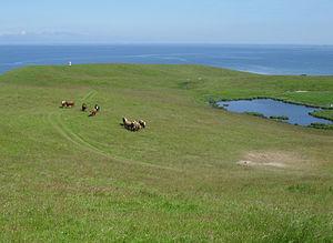 Nekselø - Image: Cows On Neksel O