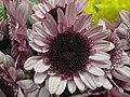 Crisantemo rosado (6309418949).jpg