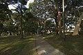 Cronulla - panoramio (78).jpg