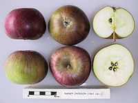 Cross section of Nancy Jackson, National Fruit Collection (acc. 1962-081).jpg