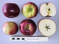 Cross section of Raritan, National Fruit Collection (acc. 1971-050).jpg