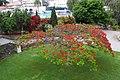 Crvena mimoza - panoramio.jpg