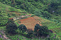 Cultures dans les montagnes - Sri Lanka.jpg
