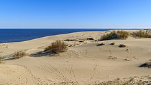 Curonian Spit NP 05-2017 img14 Epha Dune.jpg