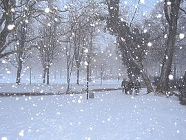 スピッツ 雪風