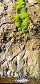 Dastoori Naka,Matheran - panoramio (70).jpg