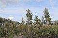Davis Creek Park - panoramio (53).jpg