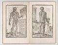 De dissectione partium corporis humani libri tres MET DP345240.jpg