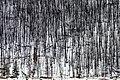 Dead forest.jpg