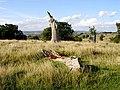 Dead tree in Whitcliff Park - geograph.org.uk - 250783.jpg