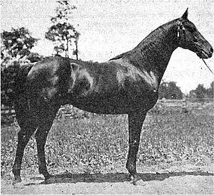 Delhi (horse) - Image: Delhi (horse)