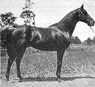 Delhi (horse) American-bred Thoroughbred racehorse